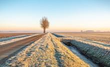 Dutch Polder Landscape In The Winter Season