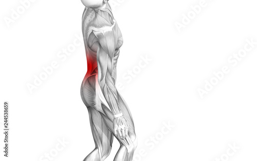 Fototapety, obrazy: Conceptual back human anatomy with red hot spot inflammation articular joint pain or spine health care therapy or sport muscle concepts. 3D illustration man arthritis or bone sore osteoporosis disease