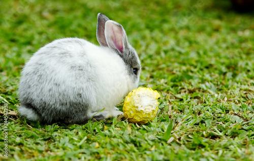 Plakat Tytuł Śliczny królik, brązowy i biały królik, matka i dziecko, spacerujący po trawniku. Małe króliki są trudne w ogrodzie.