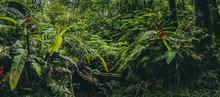 Central America Rainforest Jun...