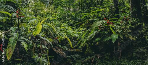 Fényképezés Central America Rainforest Jungle panorama, Costa Ricaa