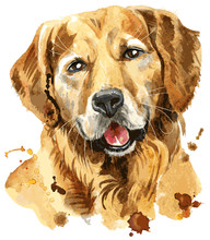 Cute Portrait Of Golden Retriever. Vector Illustration