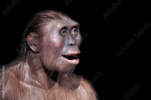 Fotografía  australopithecus afarensis expression