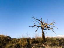 Solitario árbol Seco Cielo Az...