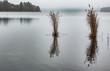 Schilf an einem See bei Eutin