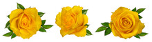 Fresh Beautiful Yellow Rose Is...