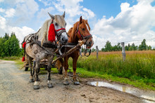 Two Horses On A Country Road