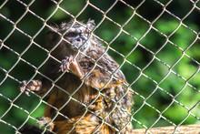 Zoo City Bauru