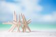 starfish on white ocean beach