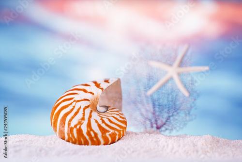 Fotografie, Obraz  nautilus seashell sea shell