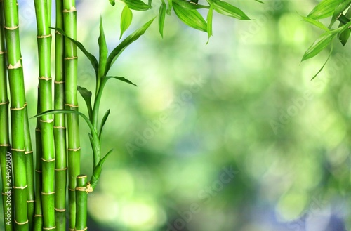 Many bamboo stalks  on background Canvas Print