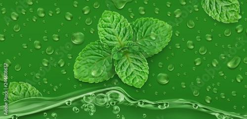 Photographie Green drops. Mint. 3d realistic vector