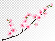 Chinese Cherry Branch With Flowers Illustration.