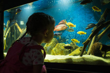 Girl Child Looks At The Fish I...