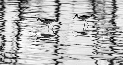 birds in water Canvas Print