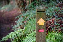 Single Signpost Without Locati...