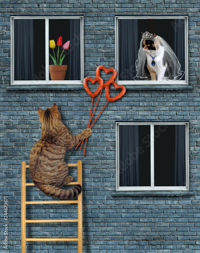 The cat gives a bouquet of sausage hearts to his bride through the window.