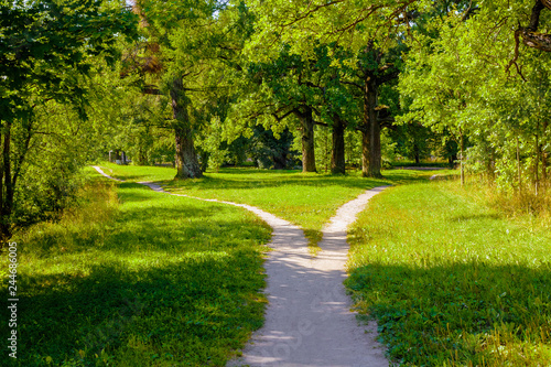 Fotografie, Obraz  The wide pedestrian track in the park is divided into two, dispersing in differe