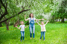 Family Walks In Blooming Apple Orchard In Spring