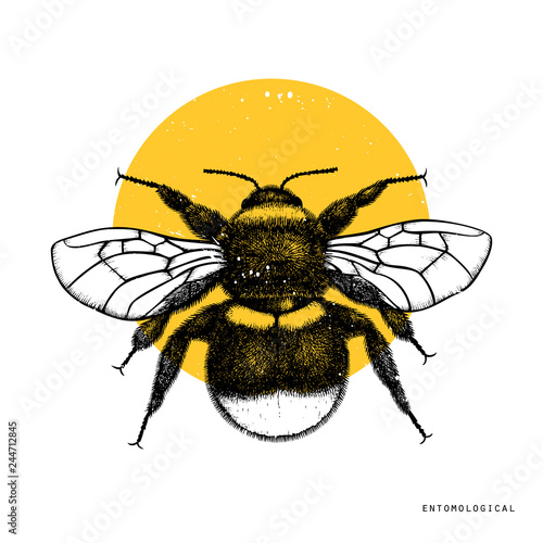 Foto Vector drawing of Bumlebee