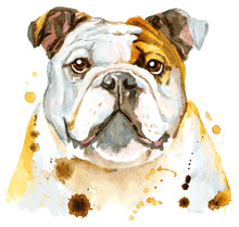 Cute Portrait Of White And Brown Bulldog. Vector Illustration