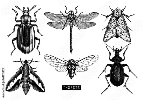 Carta da parati Vector background with hand drawn insects illustrations
