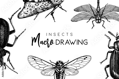 Tablou Canvas Vector frame with high detailed butterflies, beetles, cicada illustrations