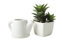 Succulents In White Flowerpot And Little Teapot With Water