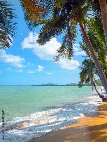 Palm tree,sea and  sand beach coast line.