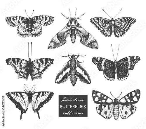 Photo sur Toile Papillons dans Grunge Vector collection of high detailed insects sketches. Hand drawn butterflies illustrations on white background. Vintage entomological drawings.