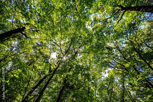 Fotobehang Aan het plafond summer road through deciduous green forest