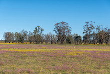 Field Of Yellow And Purple Wildflowers Near Nieuwoudtville