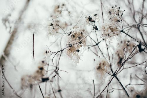 Formatfüllende Zweige im Frost Fototapeta