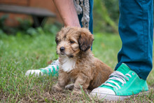 Little, Lovely, Fluffy, Cute Brown Puppy Playing Outdoors With Owner, Obediently Sitting. Happy Dog In The Park Or Garden On Green Background. Concept Of Discovering The World, Everything Is New