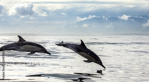 In de dag Dolfijn Dolphins jump out at high speed out of the water. South Africa. False Bay. An excellent illustration.