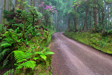 Picturesque Dirt Road In The Rainforest In Area Surrounding Lagoa Das Empadadas Lake, Sao Miguel Island, Azores, Portugal