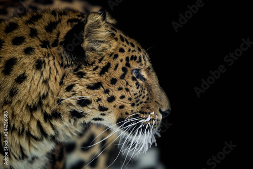 Foto auf Leinwand Leopard leopard