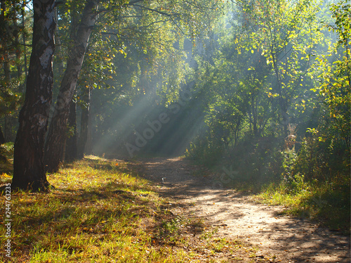 Poster Road in forest Poranne światło w lesie.