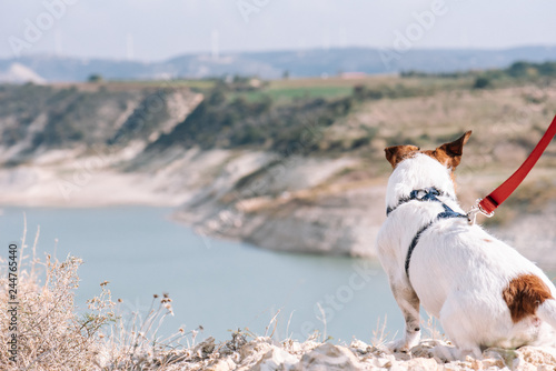 Fotografie, Tablou  Outdoor pursuit concept with dog during morning walk sitting on edge precipice a