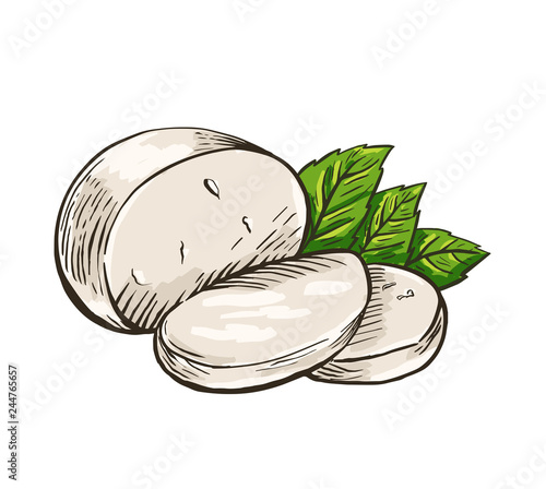 Fototapeta Cheese Buffalo mozzarella with basil leaves. Colored hand drawn engraving. Vector illustration. obraz