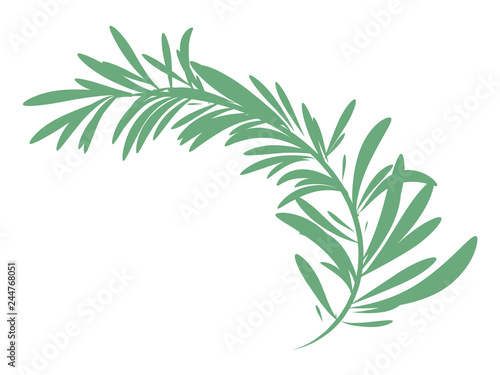 green rosemary branch isolated Fototapeta