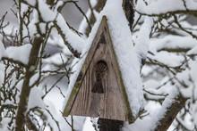 Blick Ins Nest
