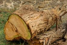Tronco Roto De árbol