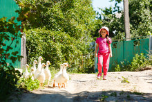 Little Girl And Geese. Image With Selective Focus And Toning