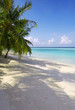 Tropical Maldives beach with coconut palm trees and blue sky.