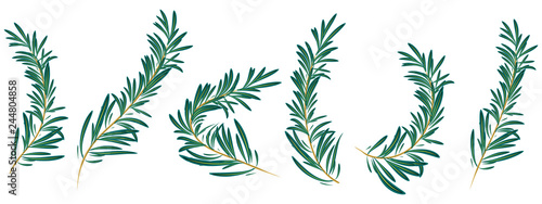 Tablou Canvas rosemary branch isolated