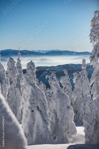 Fotografie, Obraz Zima- krajobraz- ferie zimowe