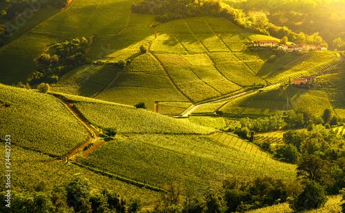 Foto auf Leinwand Honig Langhe vineyards sunset panorama, Barolo, Piedmont, Italy Europe.