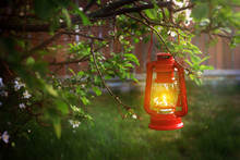 Evening Scence Of A Lt Hanging Lantern In A Tree Branch