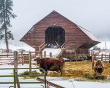 Barns Of Washington State